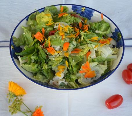 Blattsalat -  (Foto: Landwirtschaftskammer Oberösterreich - Nicht zur freien Verwendung)